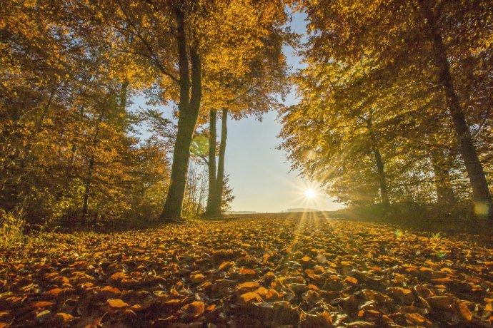 Herbstlandschaft Herbstlaub Herbstsonne